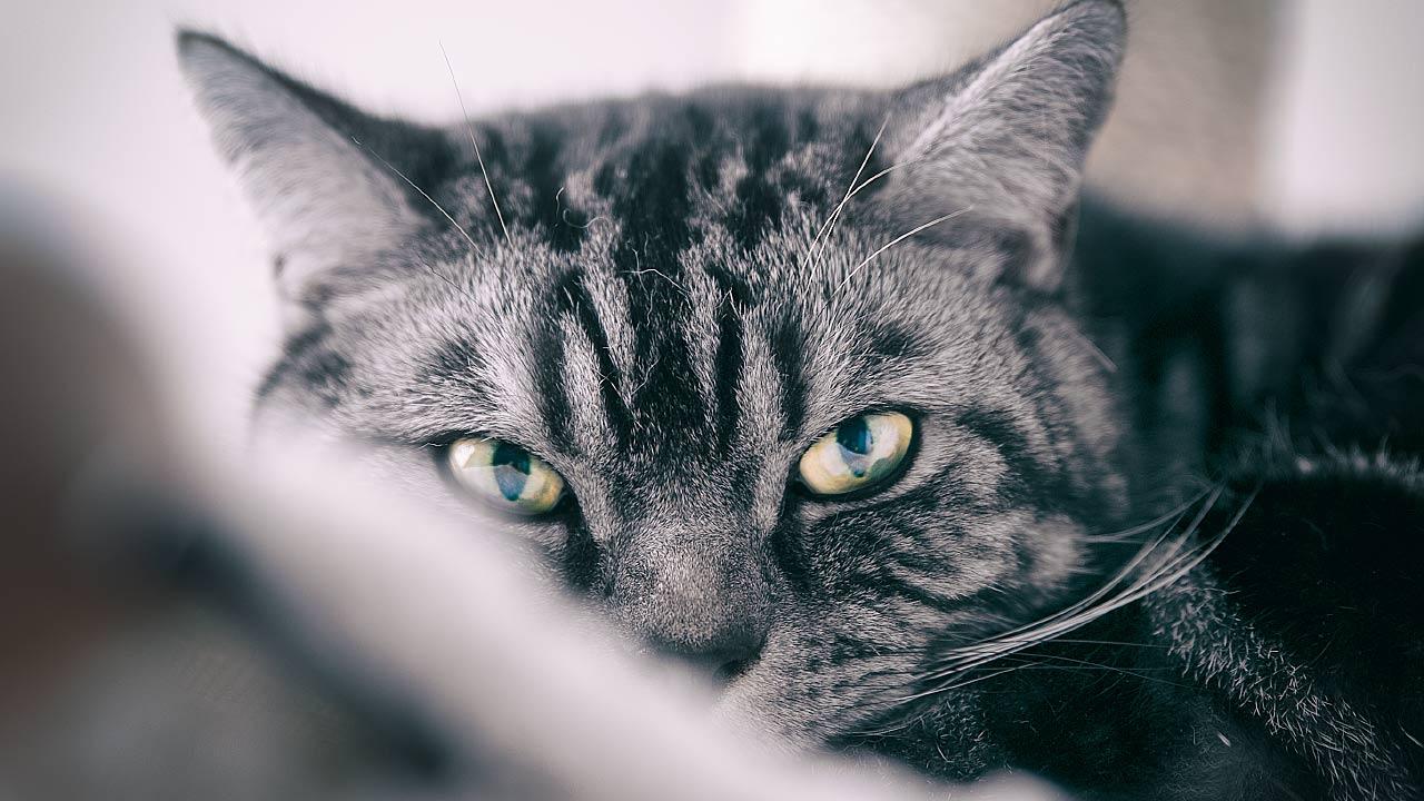 Kater Tierfotograf Katze