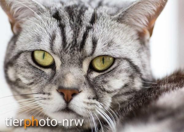 Fotoshooting mit Katze