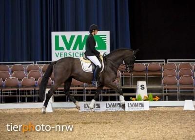 K&K Cup Münster Fotoshooting Pferd