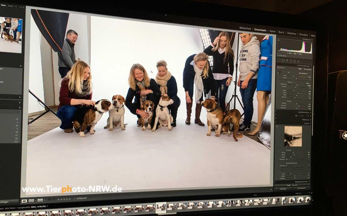 Tierfotograf Hund