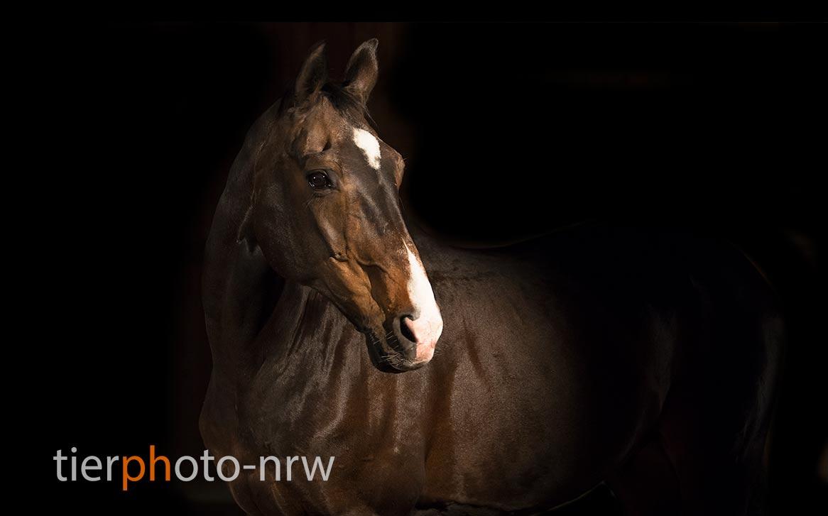 Tierfotografie Pferde