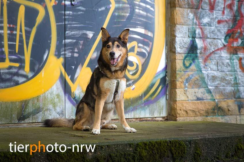 Tierphoto Hundefoto