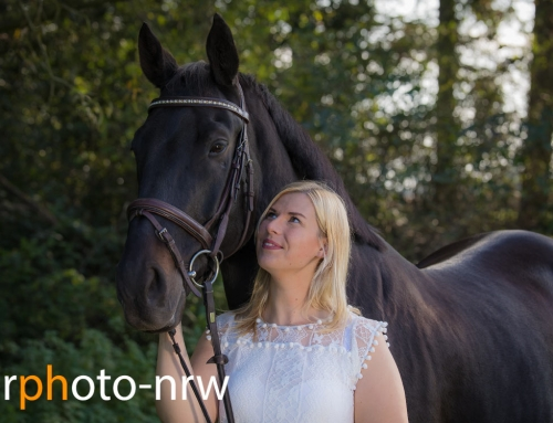Romantisches Pferdefoto