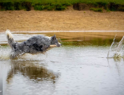 Der Sprung ins Vergnügen – Hundefotograf