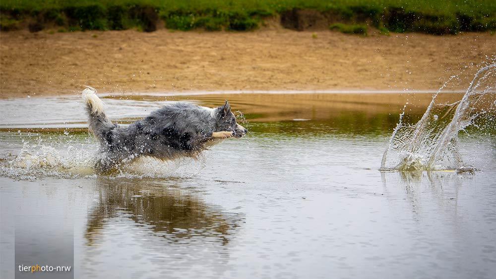 Hundefoto, Tierfotograf, Fotoshooting