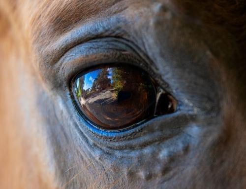 Pferde – Fotoshooting verschenkt mit Gutschein