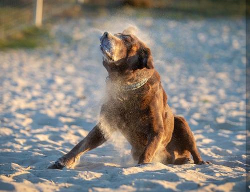 Hundebilder Fotoshooting