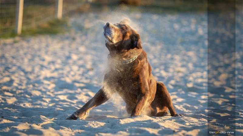 Fotoshooting Hundebilder