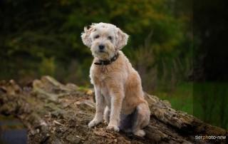 Hund fotografieren auf Baumstamm