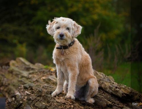 Hund fotografieren – spannende Hundebilder