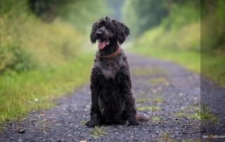 Hundefriseur Hundefotograf