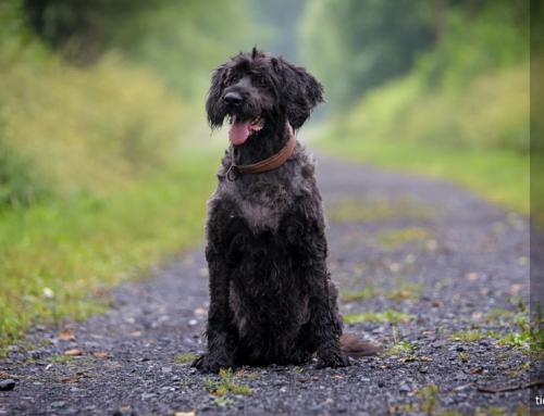 Erst Hundefriseur und dann zum Fotograf