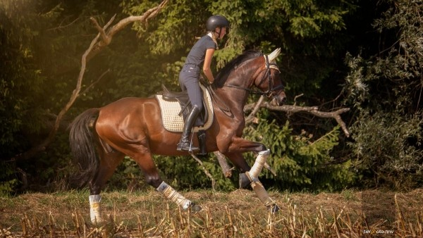 Pferdebild im Galopp