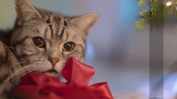 Tierfotograf Katze Fotoshooting