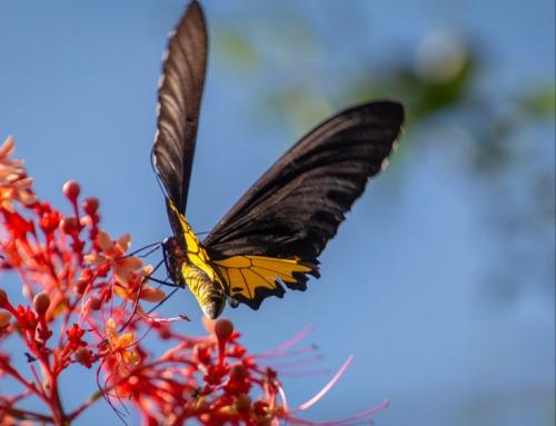 Schmetterlinge in der Tierfotografie