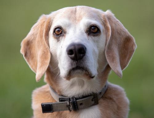Fotoshooting mit sehr süssen Hunden