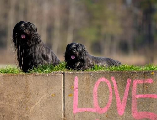 Hunde Fotoshooting im Frühling