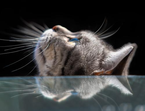 Spannende Tierfotos und die Geduld