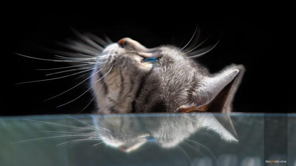 Katze blickt in Himmel