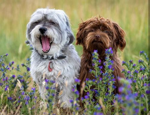 Ganz entspanntes Fotoshooting mit Hund – Der Tierfotograf