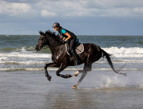 Tierfotografie – Pferde am Strand