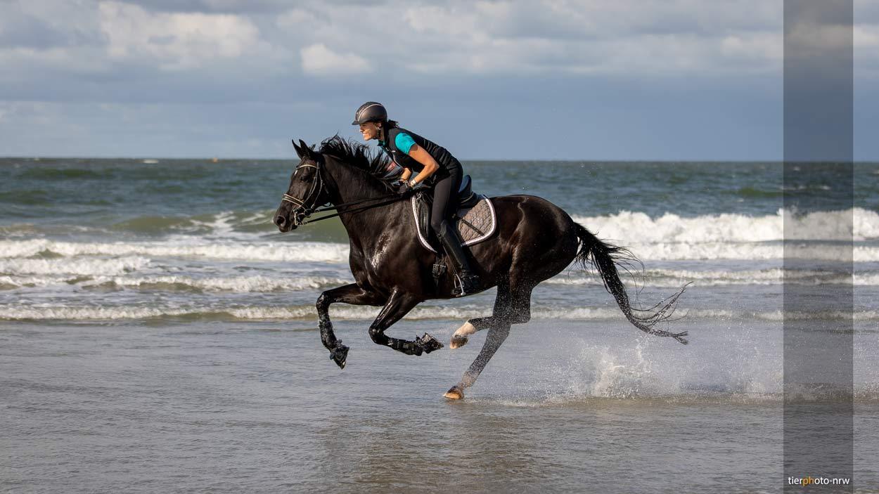 Pferdefotograf Galopp am Meer