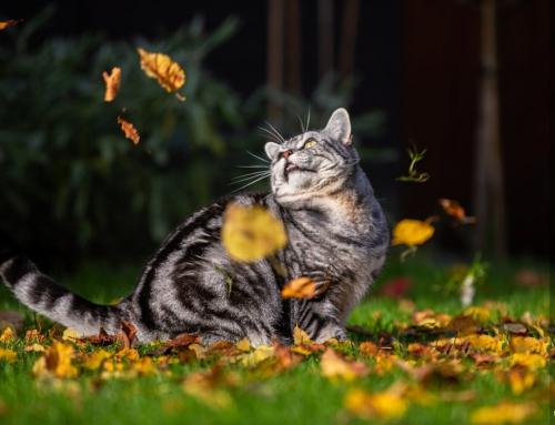 Katzen Fotografie im Herbst mit Herbstlaub