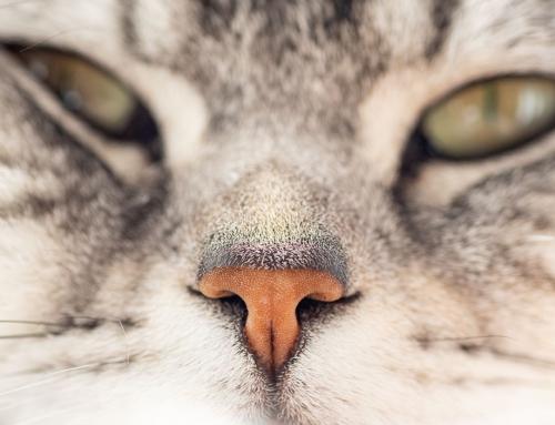 Eine Katze – ganz nah