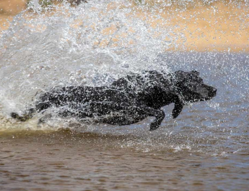 Hundefotografie in der Natur
