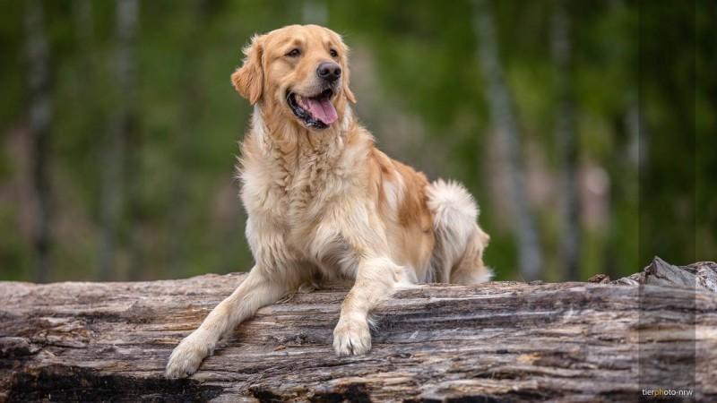 Hund in der Natur auf Holzbalken