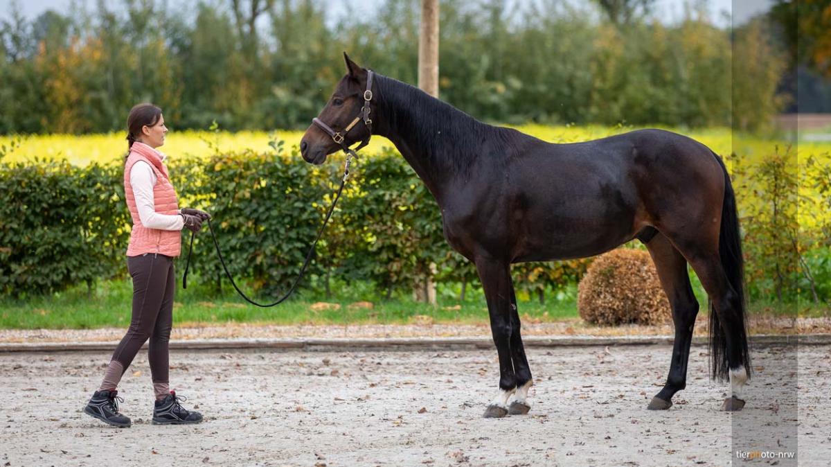 Pferd-reiterin-tierfotograf-MA4 4486-1