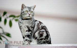 Die-Katze-als-Model