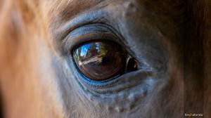 Fotoshooting-Pferd-Gutschein-Pferdeauge-Tierfotograf-Geschenkgutschein-MA4 0004-1