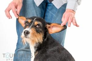 Hund-Fotografie-Studio