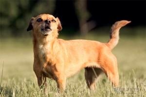 Hund-Tierfoto