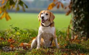 Hunde-Fotografie kl