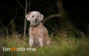Hunde-Fotoshooting-Gutschein-MA4 9216-1