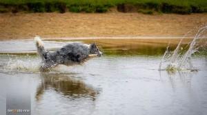 Hundefoto-Fotoshooting-Wasser-Natur-MA4 4417-1