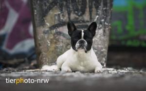 Hundefotoshooting, Tierfotograf, Hundefotograf