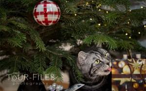 Katze-Tierfoto-Hamm