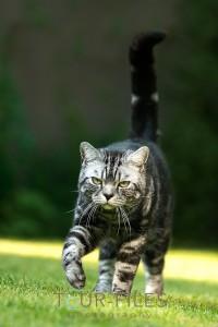 Katze-Tierphotographie