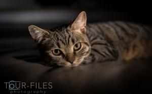 Kleine Katze zuhause0462