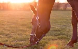 Pferd-Fotograf-Muenster-romantisch