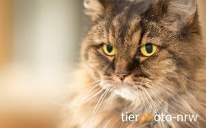 Tierfoto-Katzenfoto-MA4 6906-1