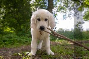 Tierfotograf-Hund-draussen-welpe-MA4 7566-1