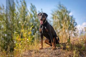 Tierfotograf-Hundefotografie-MA4 2444-1