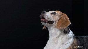 Tierfotograf-Tierfoto-Hund-Fotostudio-MA4 9526-1