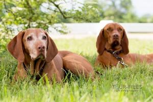 hunde-tierfoto