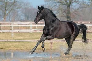 tierfoto-wildes-pferd