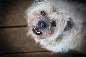 weisser-hund-tierfotografie